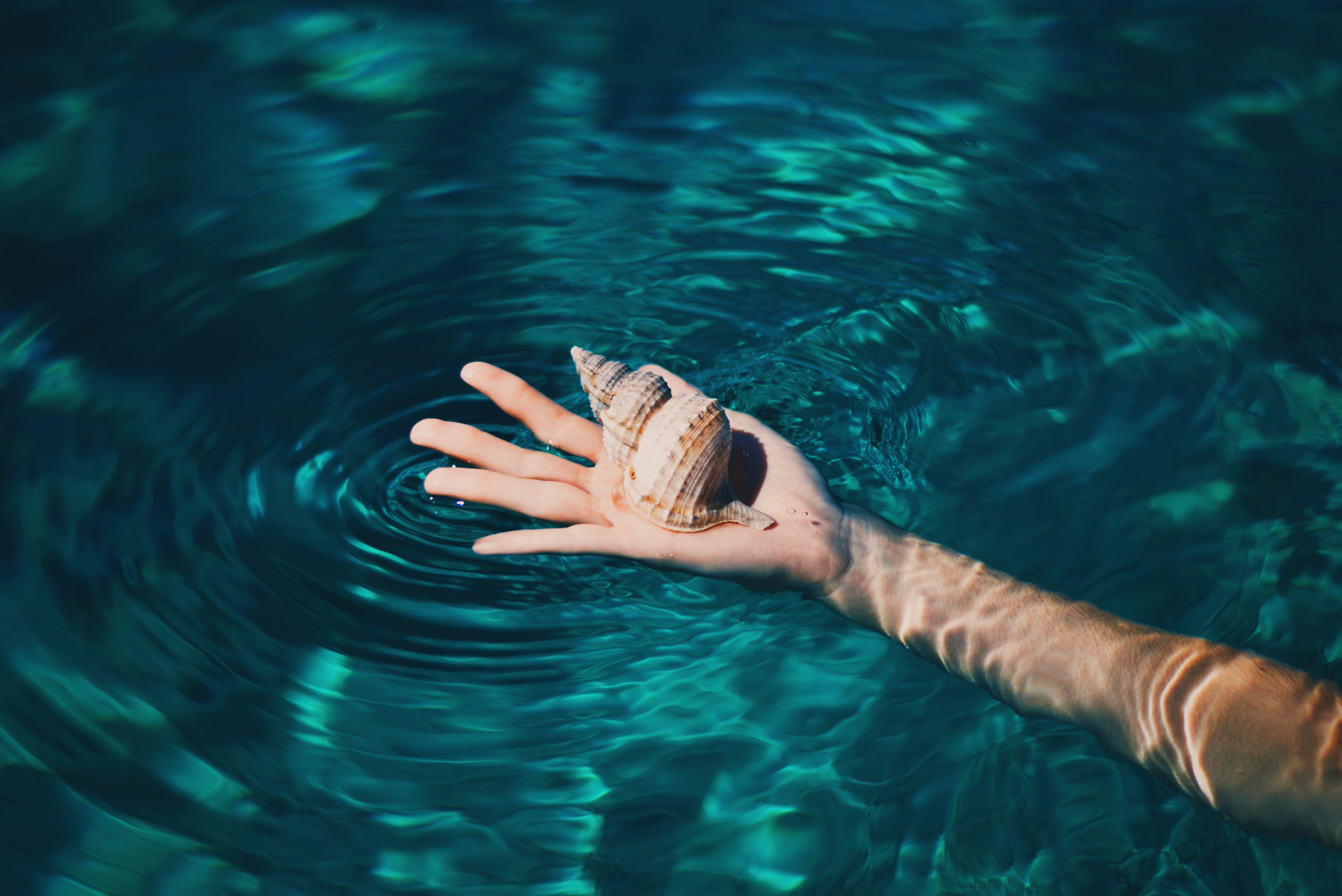 A person's hand holding a shell in a pool of water.